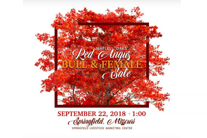 Maple Oaks Red Angus Bull and Female Sale on 9/22/18