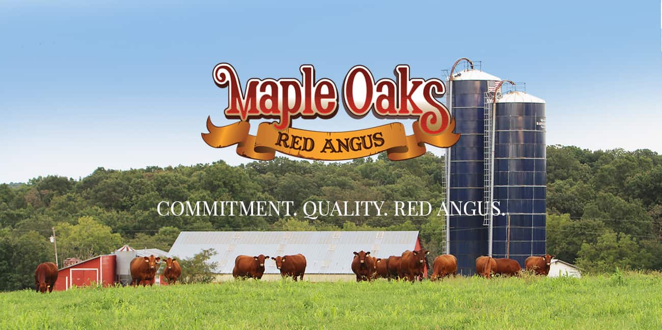 Maple Oaks Red Angus Missouri